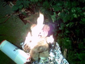 photo shows a burning of Pudsey bear on a previous burn Pudsey Friday - an event you can do in your own garden at home.